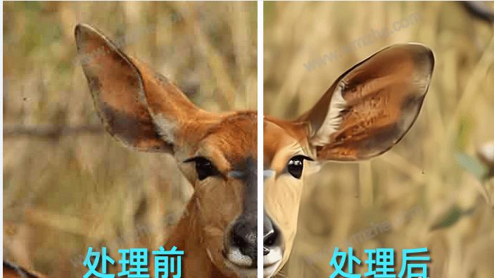 真图智慧图像如何修复模糊照片?效果堪比Photoshop