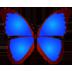 bkViewer 照片浏览器 64位 v5.5.5.0 官方版