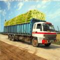 甘蔗卡车进化