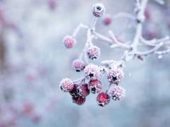 今日霜降:恍然暮秋至,静候冬日来