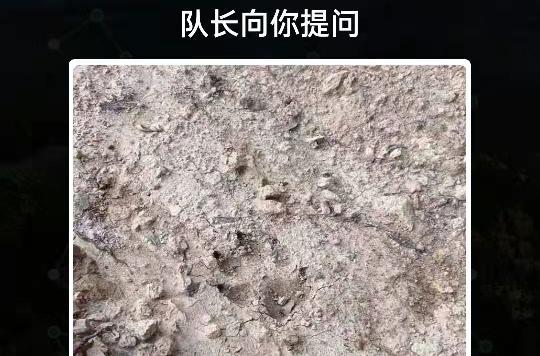 是豹子的脚印吗
